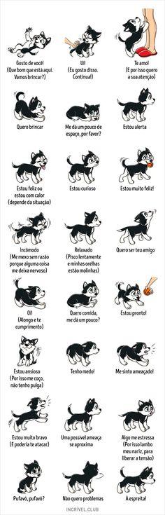 Dicionário docomportamento canino
