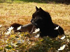 Love black kitties