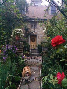 Corgi at the garden gate, Stonehouse Farm, Maine