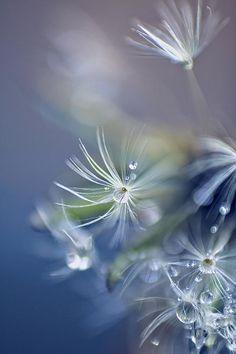 Morning Dew Photograph
