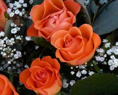 Orange Roses are the symbol of Courage and Love together! :)