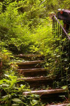 Steps into an overgrown garden.