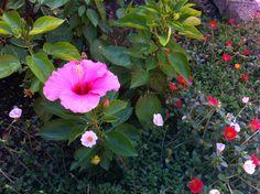 my garden believes that it is still summer...!!!