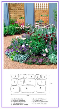 Silver & Purple Border ........................... 1. Creeping Thyme 'Doone Valley' (Thymus doerfleri) 2. Lamb's Ear (Stachys byzantina) 3. Wormwood 'Powis Castle' (Artemisia arborescens) 4. Bellflower 'Sarastro' (Campanula punctata x trachelium) 5. English, Austin Rose 'Winchester Cathedral' (Rosa) 6. Catmint 'Walker's Low' (Nepeta racemosa) 7. Pompon Dahlia 'Rocco' 8. Culver's Root 'Fascination' (Veronicastrum virginicum) 9. White Sagebrush 'Silver Queen' (Artemisia ludoviciana)