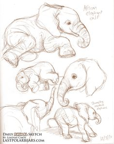 Studies of an Asian elephant calf and a baby meerkat. Description from lastpolarbears.com. I searched for this on bing.com/images