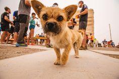 Foto cachorrita en el maratón