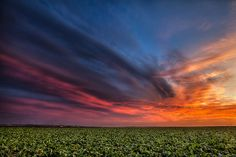 Sunset over a Lettuce Field by vincestamey, via Flickr