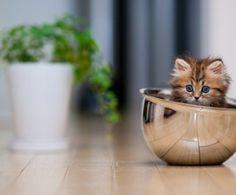 haustiere-katze-erziehen-katzen-verstehen