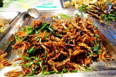 Insectes. Koh Samui. Thaïlande.