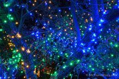 Blossoms of Lights @ Denver Botanic Garden (Denver, Colorado)