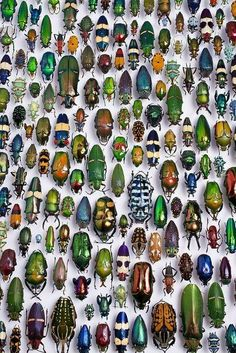 Assorted tropical Beetles, a great illustration - - LOVE <3... Beetles are my favorite