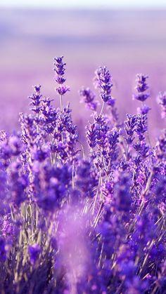 Beautiful Lavender Wallpaper: HD Lavender Mobile Background - http://helpyourselfimages.com/portfolio/beautiful-lavender-wallpaper-hd-lavender-mobile-background/