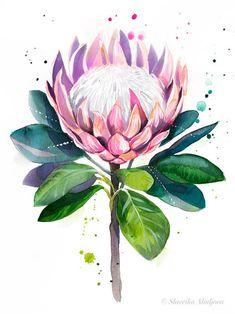 Flor Protea, Protea Art, Protea Flower, Botanical Drawings, Botanical Art, Botanical Illustration, Illustration Art, Illustrations, Watercolor Plants