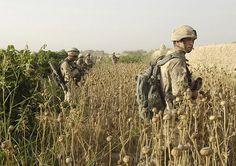 Afghan-Patrol Canadian soldiers walk through a poppy field