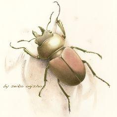 クワガタ Pictures Of Insects, Pictures To Draw, Color, Colour, Colors