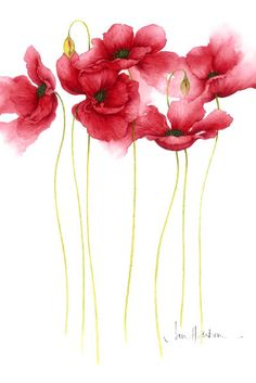 Poppies by Jan Harbon...want this framed for my house!!
