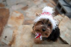 Candy Cane Red and White Knit Dog Hat Small por DCimaginations