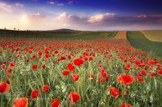 Moravian Tuscany by radekseverafoto