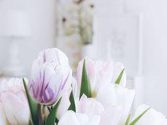 Tulpenliebe  Neue Woche neues Abenteuer... Guten Morgen zusammen! . . These formerly white tulips are becoming more and more colorful. . . . #happynewweek #gutenmorgen #goodmorning #tulips #ichliebetulpen #tulpen #flower #flowers #flowerslovers #flowerstagram #instaflowers #flowersofinstagram #flowersmakemehappy #floweroftheday #flowergirl #flowerblogger #flowerpowerbloggers #blush