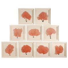Set of 9 Red Coral Sea Fans Framed in Shadow Boxes | From a unique collection of antique and modern nautical objects at http://www.1stdibs.com/furniture/more-furniture-collectibles/nautical-objects/