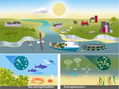 Eutrophication and nitrogen cycle pollution Teaching Science, Life Science, Global Warming Poster, Nitrogen Cycle, Marine Ecosystem, Marine Environment, Great Life, Middle School Science, Vsco Filter