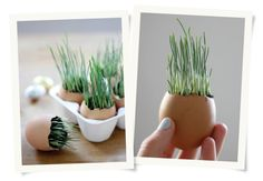 Grow Your Own Wheatgrass Easter Egg
