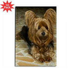Draw Dogs A cute Yorkshire terrier dog with a drawing effect, Wall Clock, 10 by - Yorky Terrier, Yorshire Terrier, Pitbull Terrier, Dog Training Methods, Basic Dog Training, Dog Training Techniques, Yorkshire Terrier Dog, Yorkies, Yorkie Dogs