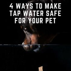 4 Ways to Make Tap Water Safe for Your Pet | Savory Prime Pet Treats