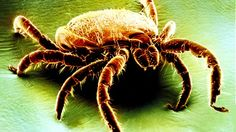 Niles Animal Hospital and Bird Medical Center: 10 Essential Facts About Lyme Disease