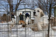 U.S. Backtracks on Purge of Animal Abuse Records—What We Know