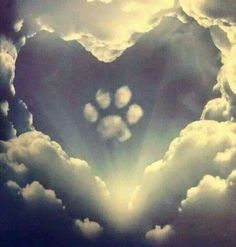 All dogs go to heaven. Grateful for the time He lends them to us. ❤️ All dogs go to heaven. All Dogs, I Love Dogs, Cute Dogs, Dogs And Puppies, Doggies, Animals And Pets, Cute Animals, Pet Loss Grief, Pet Remembrance