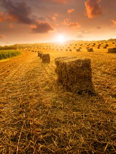Hayfield at Sunset by John Pszeniczny on Capture Outdoors Maryland // Farmers Bailing Hay at Sunset in Upperco, MD.