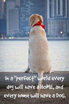 Make a world a little bit better - adopt or buy a dog! #dog #dogs #pets #quote | www.fordogtrainers.com