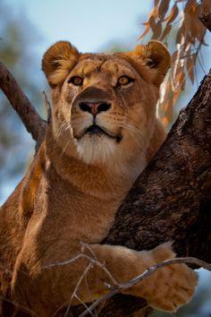 https://flic.kr/p/bUgc2r | Safari RamatGan-041 | Featured in: www.fromthegrapevine.com/nature/take-visual-journey-throu...