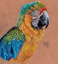 Kristyn Janelle - colored pencil macaw. More great bird drawings at this link, too.