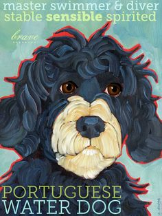 Portuguese Water Dog No. 1 - magnets, coasters and art prints on Etsy, $6.00