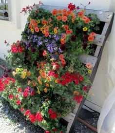 Pretty Pallet Planter filled with Petunias! Container Gardens ~ Our Fairfield Home and Garden Pretty Pallet Planter filled with Petunias! Container Gardens ~ Our Fairfield Home and Garden Vertical Pallet Garden, Pallets Garden, Pallet Gardening, Vertical Gardens, Garden Ideas With Pallets, Gardening Tips, Herb Garden Pallet, Raised Gardens, Gardening Courses