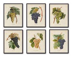 French Grapes Print Set 1  Botanical Prints  by BelleBotanica