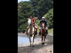 New Zealand Horse Trekking and Horseback Riding Adventures on the the Kawhia... http://www.horse.co.nz/horse-treks.html