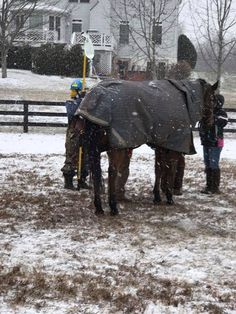 The horse did not appear to be injured, but was going to be checked out more thoroughly by the vet.