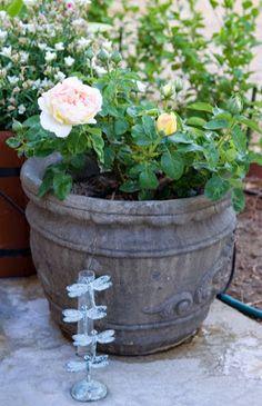 High Desert Gardener: Helpful Hints for Summer Gardening