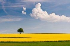 제2의눈™의 사진뿐이야 :: 유채꽃과 나무