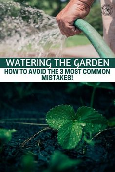 Watering The Garden – How To Avoid The 3 Most Common Mistakes! - This article was put together to offer three very common mistakes that gardeners face from improper watering. The author does a great job at explaining these three common mistakes. #garden #gardening #gardeningtips #homestead #homesteading