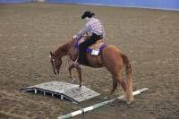 senior trail horse class - Google Search