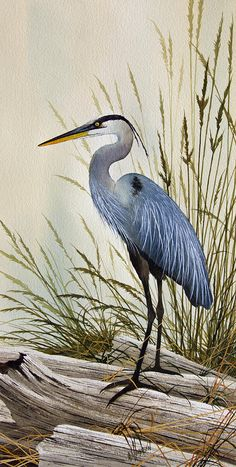 Great Blue Heron Shore Painting  - Great Blue Heron Shore Fine Art Print