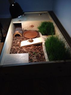 I have seen numerous suggestions for Russian tortoise diet Some great Some awful. Russian Tortoises are nibblers and appreciate broad leaf plants. Tortoise Cage, Tortoise House, Tortoise Habitat, Turtle Habitat, Giant Tortoise, Tortoise Turtle, Terrarium Diy, Turtle Terrarium, Turtle Care