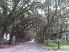 A tree-lined street St Augustine Florida near Fountain of Youth.