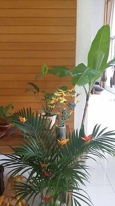 Bananeira, ráfia e copo de leite, ajudam a decorar a mesa. Plants, Safari Party, Drinkware, Milk, Nature, Plant, Planets