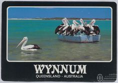 """<span class=""""caption-caption"""">Wynnum</span>, c1970-2000. <br />Postcard, collection of <span class=""""caption-contributor"""">Murray Views Collection</span>. Aboriginal Words, Brisbane River, Queensland Australia, When I Grow Up, To My Daughter, Coastal, Childhood, History, Caption"""