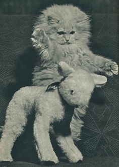 Vintage Photos of Cats from the 1950's
